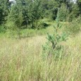 Come build your dream home today on this lot just listed for sale currently in Cambridge Isanti School District in Minnesota 892 Elins Lake Rd SE, Cambridge, MN 55008 $25,000 […]